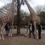 Go Team Fota Wildlife Park